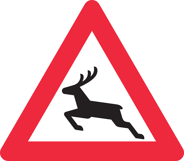 deer-crossing-car-accident